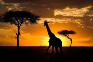 Кения - сафари и плаж