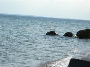 Почивки на Ситония - Халкидики, Гърция