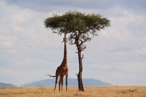 Сафари и почивка в Занзибар